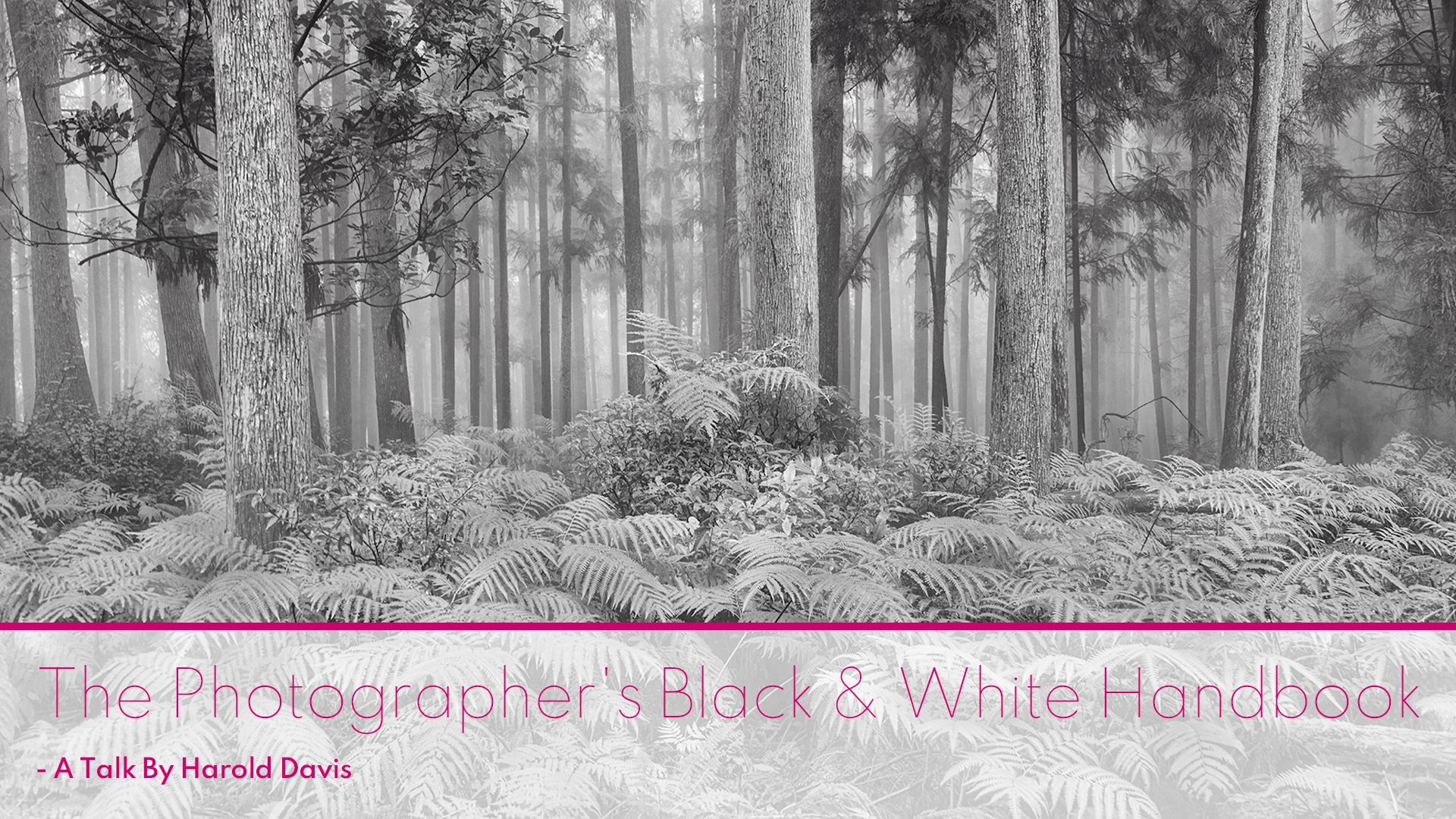 The Photographer's Black & White Handbook – A Talk By Harold Davis
