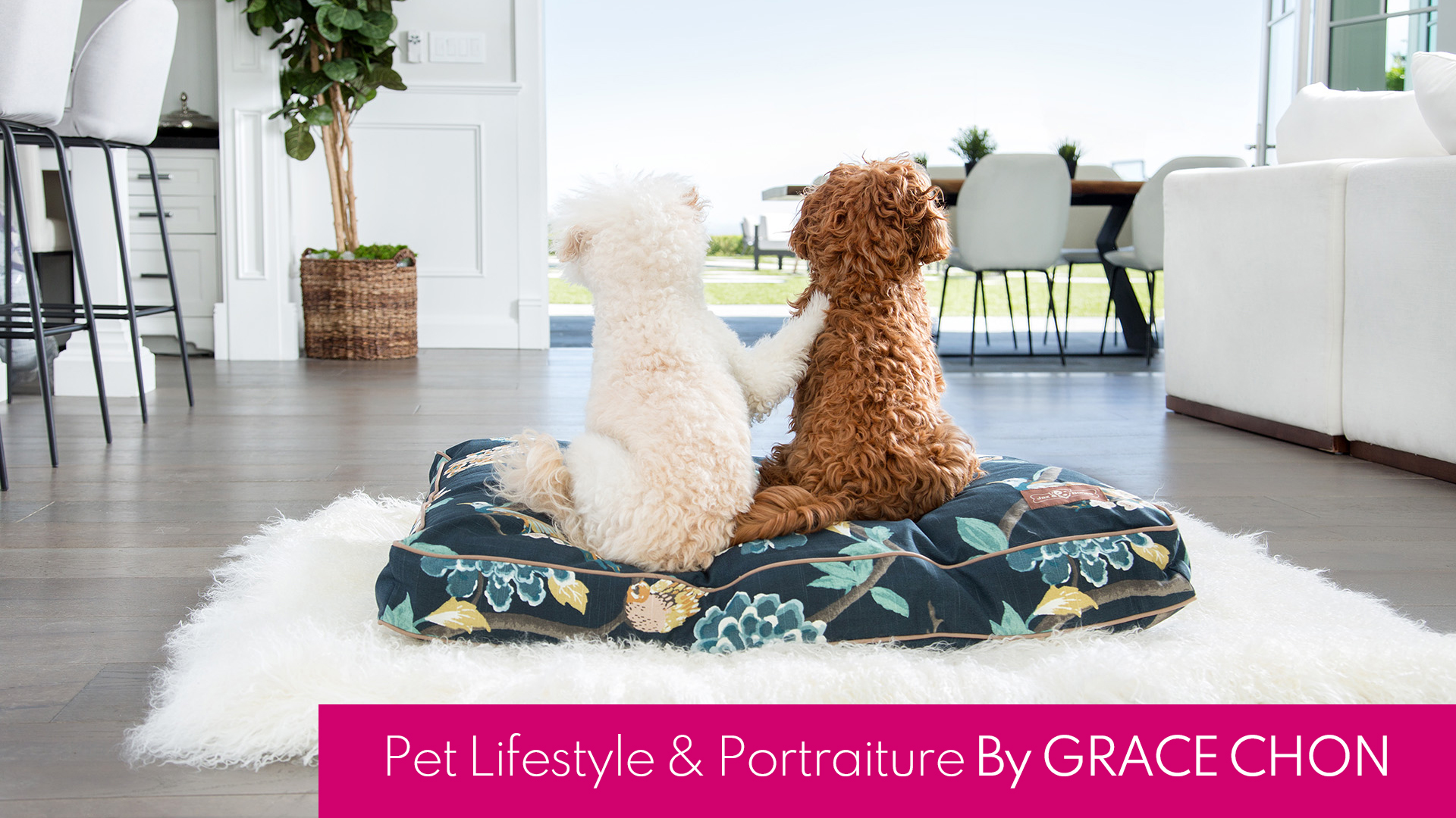 Pet Lifestyle And Portraiture By Grace Chon