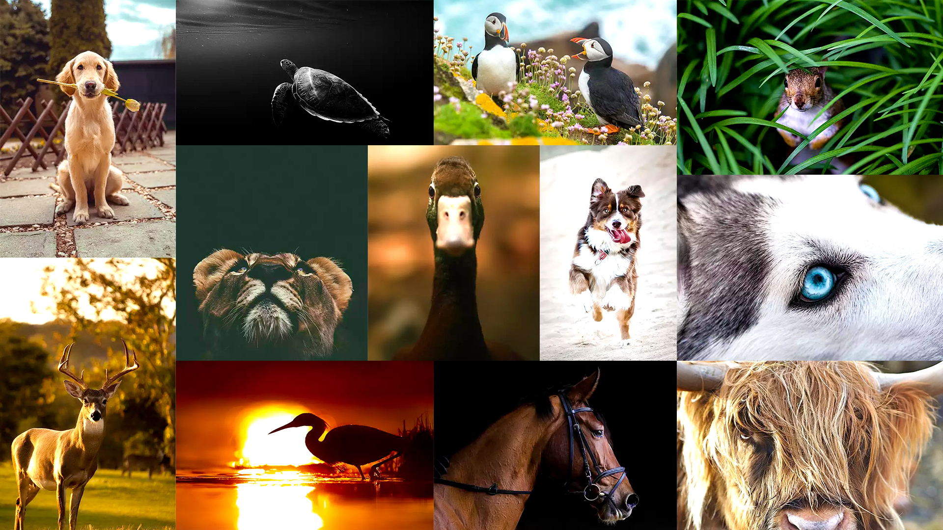 30 Unique Animal Photography Examples To Inspire You