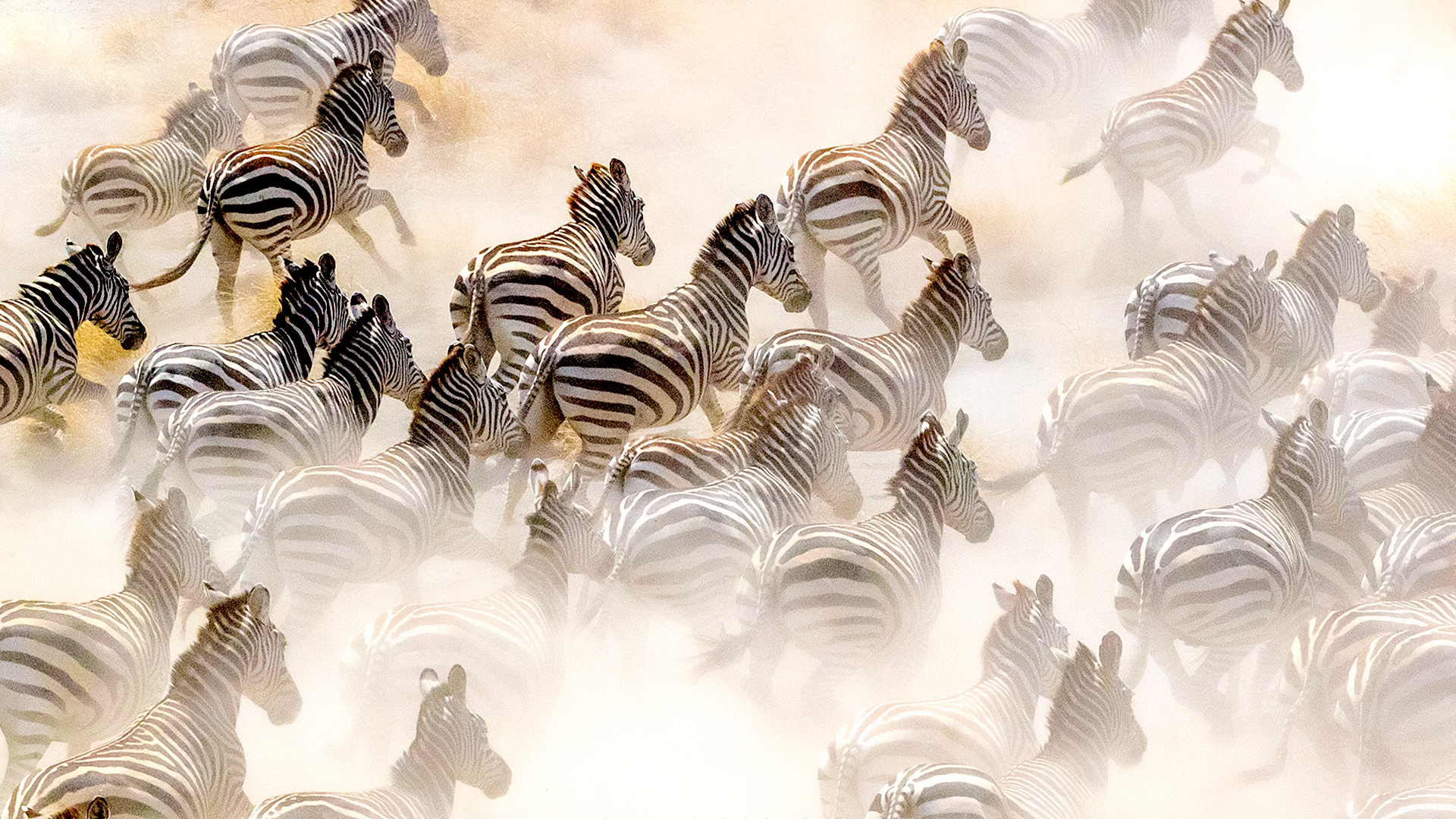 The Art Of The Image   A Talk By Art Wolfe